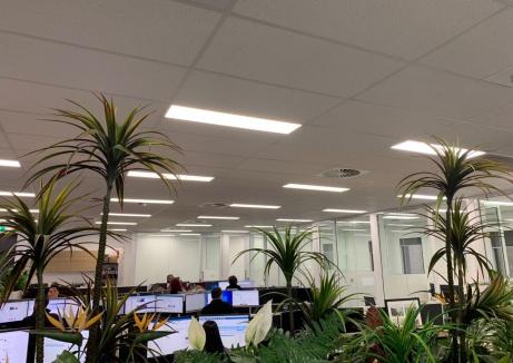 Modern Office Interior With Indoor Plants - Plasterboard Repair - TM Linings